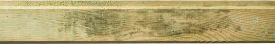 Holzmerkmale, Schimmel / Stockflecken
