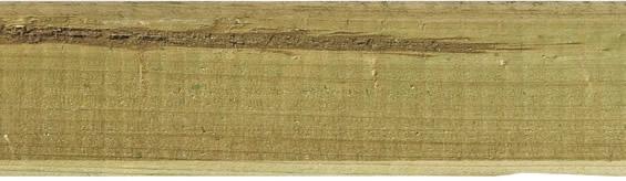 Holzmerkmale, Markröhre